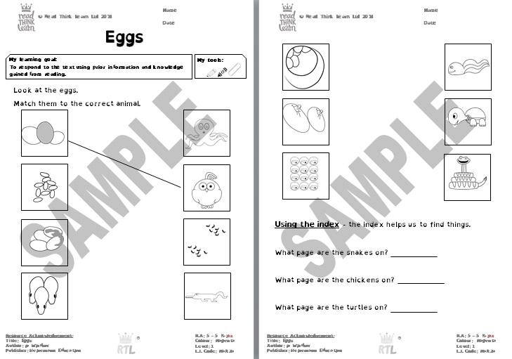 Eggs - Magenta